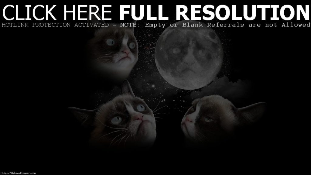 amazing-grumpy-cat-high-resolution-wallpaper-PIC-MCH039624-1024x576 Grumpy Cat Phone Wallpapers 23+