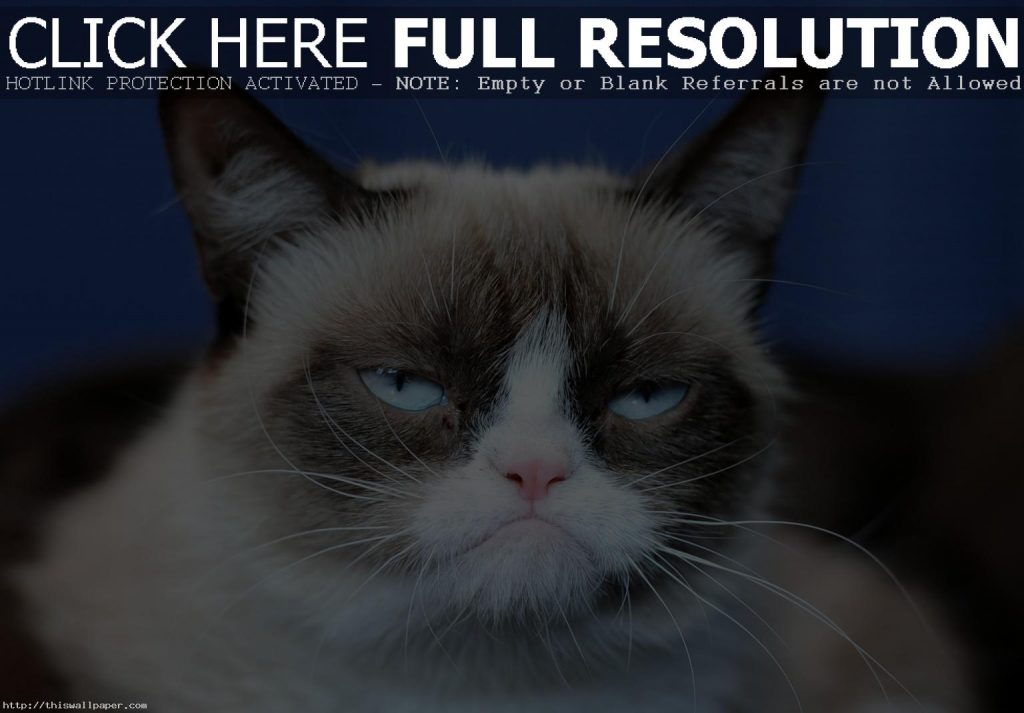 awesome-grumpy-cat-high-definition-wallpaper-PIC-MCH042436-1024x713 Grumpy Cat Meme Wallpapers 34+
