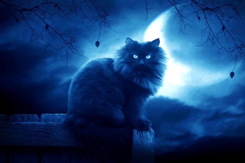 cool-cats-wallpapers-x-for-windows-PIC-MCH026239 Nyan Cat Wallpaper Mac 28+