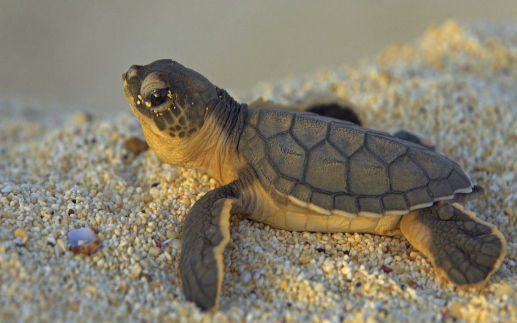 cute-turtle-PIC-MCH055688-1024x640 Funny Turtle Wallpapers 27+