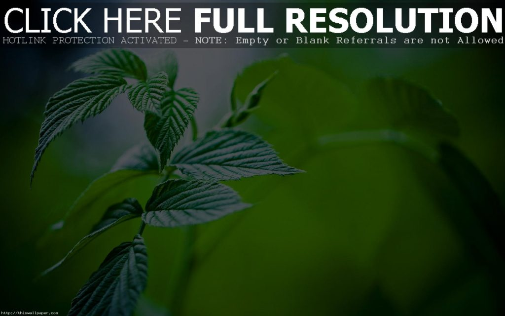 d-abstract-tea-leaves-top-hd-new-wallpaper-PIC-MCH019512-1024x640 Hd Green Wallpapers For Pc 32+
