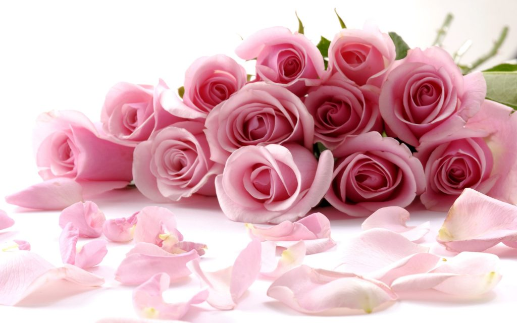 delicate-beautiful-light-pink-roses-wallpapers-PIC-MCH057479-1024x640 Wallpapers Pink Roses 36+