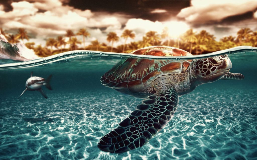 download-turtle-wallpaper-x-PIC-MCH05909-1024x640 Sea Turtle Wallpapers For Desktop 25+