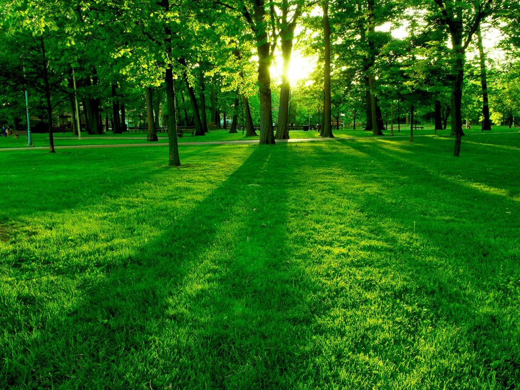 downloadfiles-wallpapers-green-park-wallpaper-landscape-nature-PIC-MCH060364-1024x768 Hd Green Wallpapers Free 31+