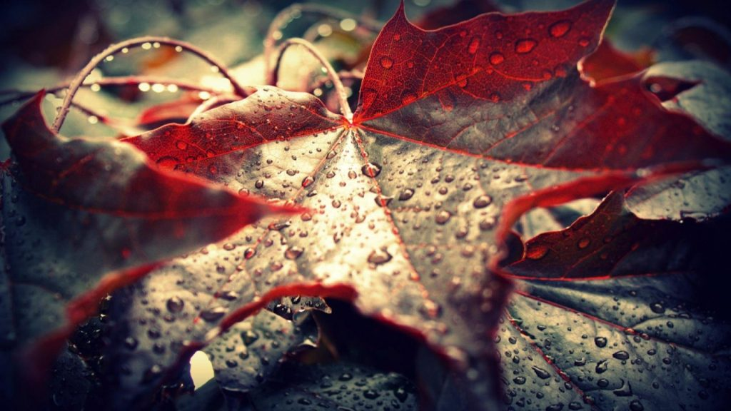 facebook-timeline-cover-rain-lonely-summer-wallpaper-red-PIC-MCH062823-1024x576 Lonely Wallpapers For Facebook 19+
