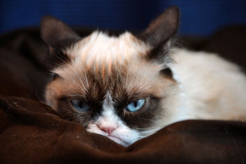 full-size-funny-cats-wallpapers-x-for-mac-PIC-MCH030569 Funny Grumpy Cat Wallpapers 17+