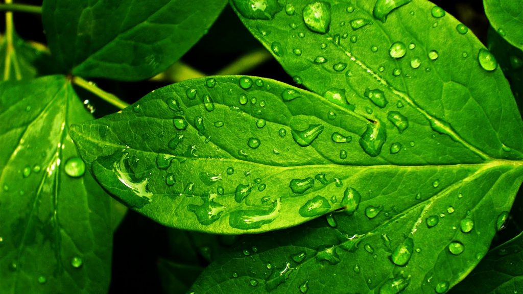 green-images-PIC-MCH018214-1024x576 Hd Green Wallpapers For Pc 32+