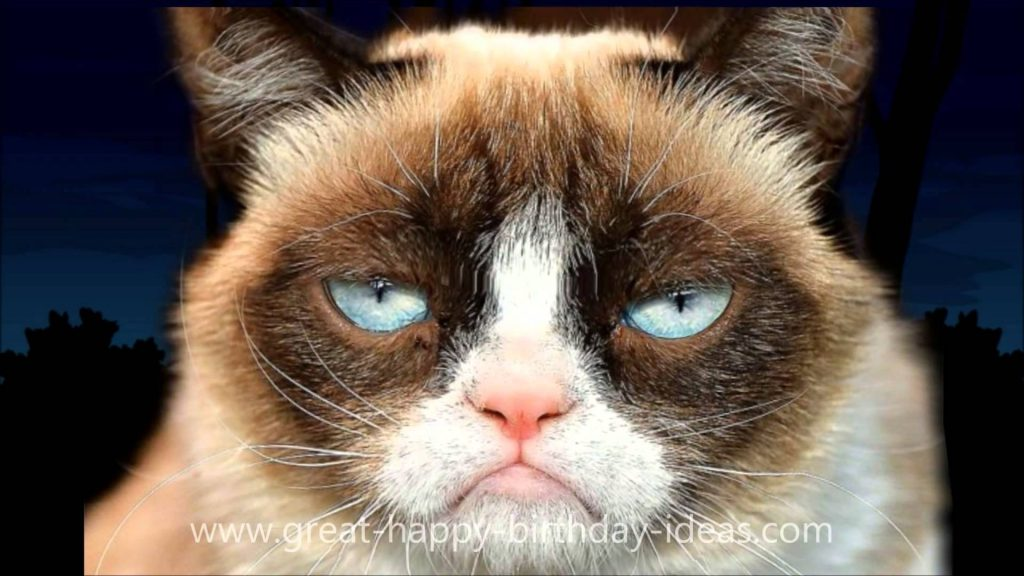 grumpy-cat-PIC-MCH070123-1024x576 Grumpy Cat Christmas Wallpapers 21+