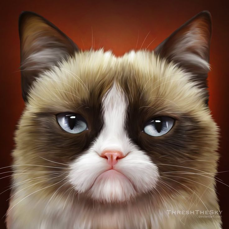 grumpy-cat-clipart-sad-kitty-PIC-MCH070142 Grumpy Cat Christmas Wallpapers 21+