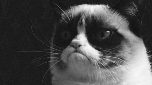 Grumpy Cat Wallpapers For Free 23+