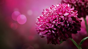 Wallpapers Pink Flowers 42+