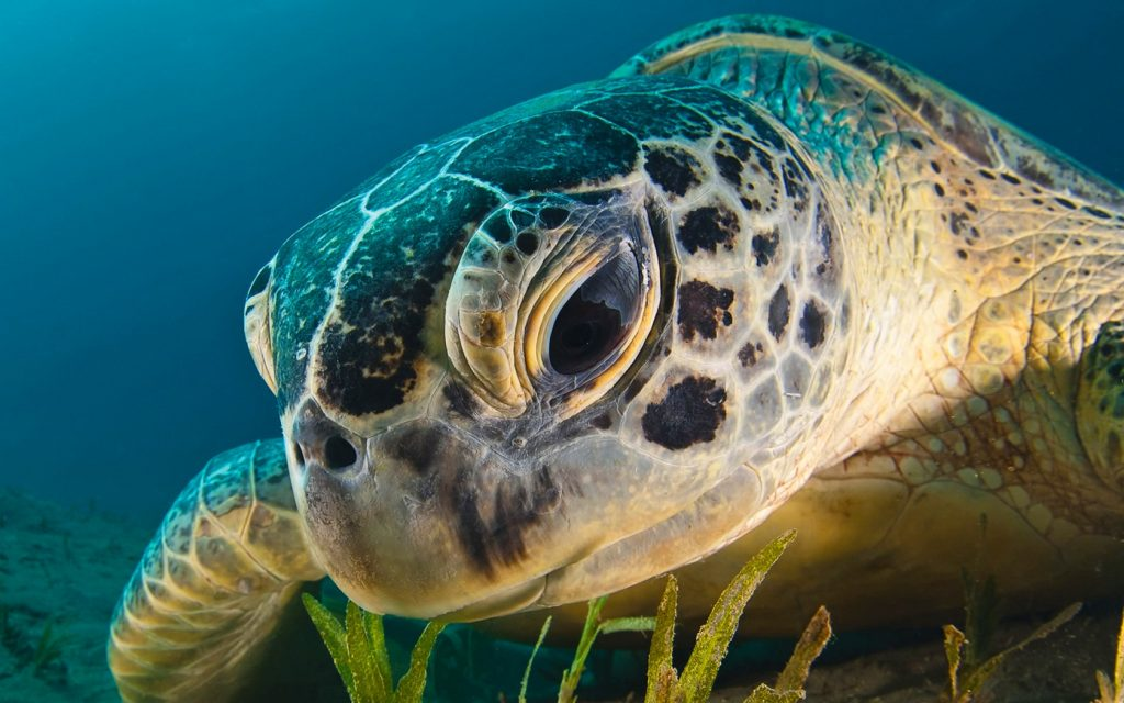 iwp-turtle-wallpapers-PIC-MCH078050-1024x640 Funny Turtle Wallpapers 27+