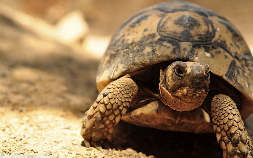 keRYcAz-PIC-MCH079898-1024x640 Awesome Turtle Wallpapers 32+