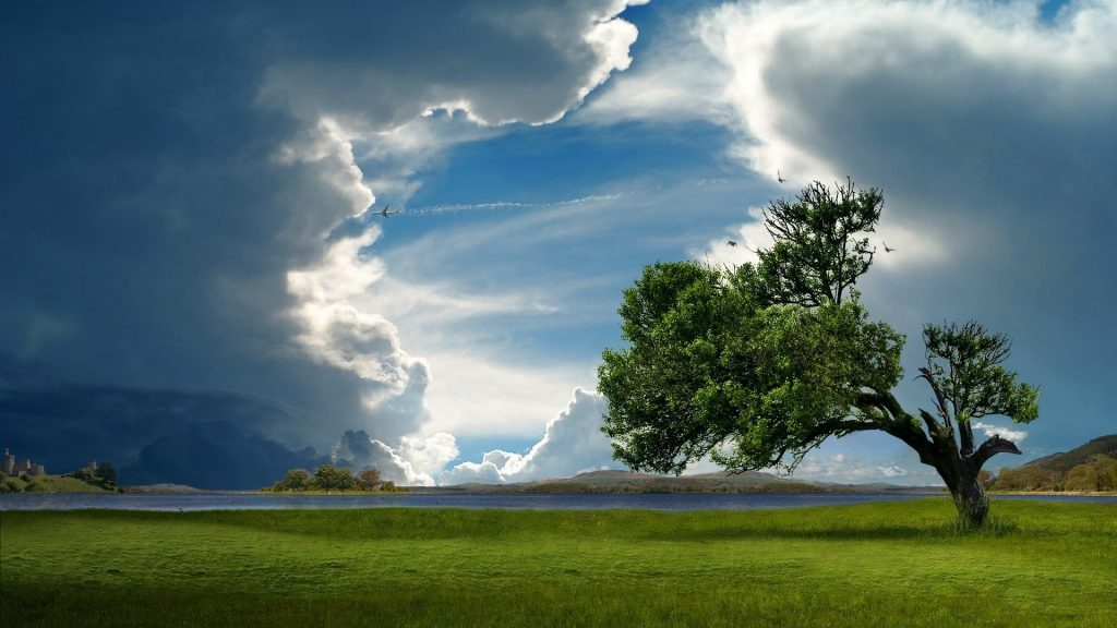 lonely-trees-wallpaper-PIC-MCH082889-1024x576 Lonely Wallpapers Hd 27+