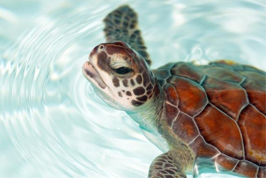 lrzAB-PIC-MCH083730 Baby Turtle Wallpapers 32+