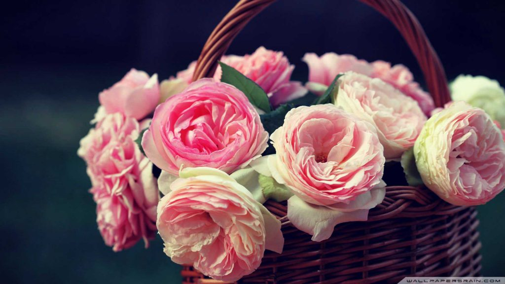 pink-rose-wallpaper-hd-image-PIC-MCH095319-1024x576 Wallpapers Pink Roses 36+