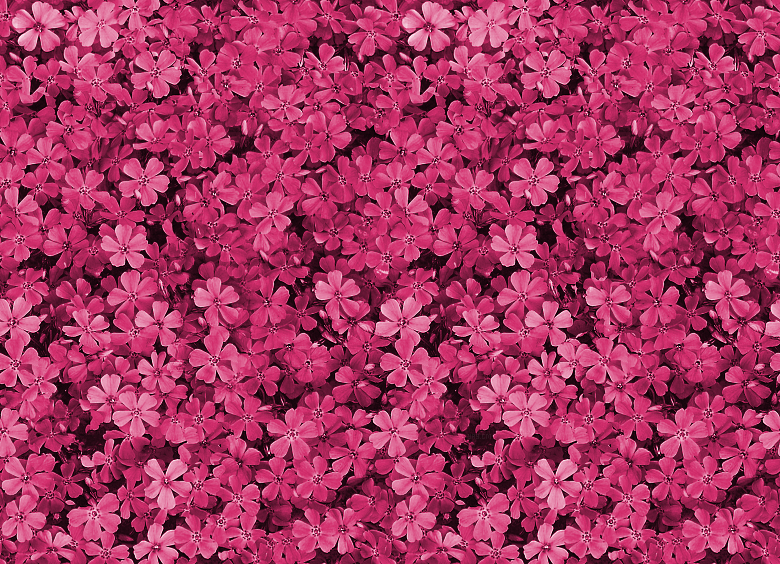 pretty-field-of-pink-flowers-PIC-MCH096171 Wallpapers Pink Tumblr 20+