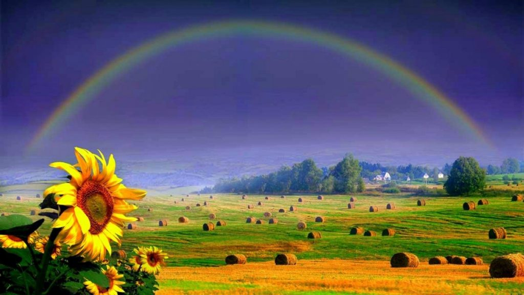 rainbows-harvest-fields-time-summer-vacation-rainbow-sunflowers-sky-yellow-english-bales-green-wall-PIC-MCH097473-1024x576 Rainbow Wallpapers For Ipad 40+