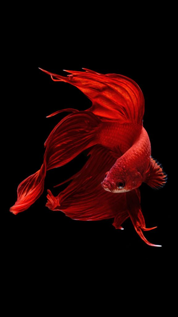red-fish-wallpaper-x-for-xiaomi-PIC-MCH032854-576x1024 Red Wallpaper Hd Iphone 6 56+