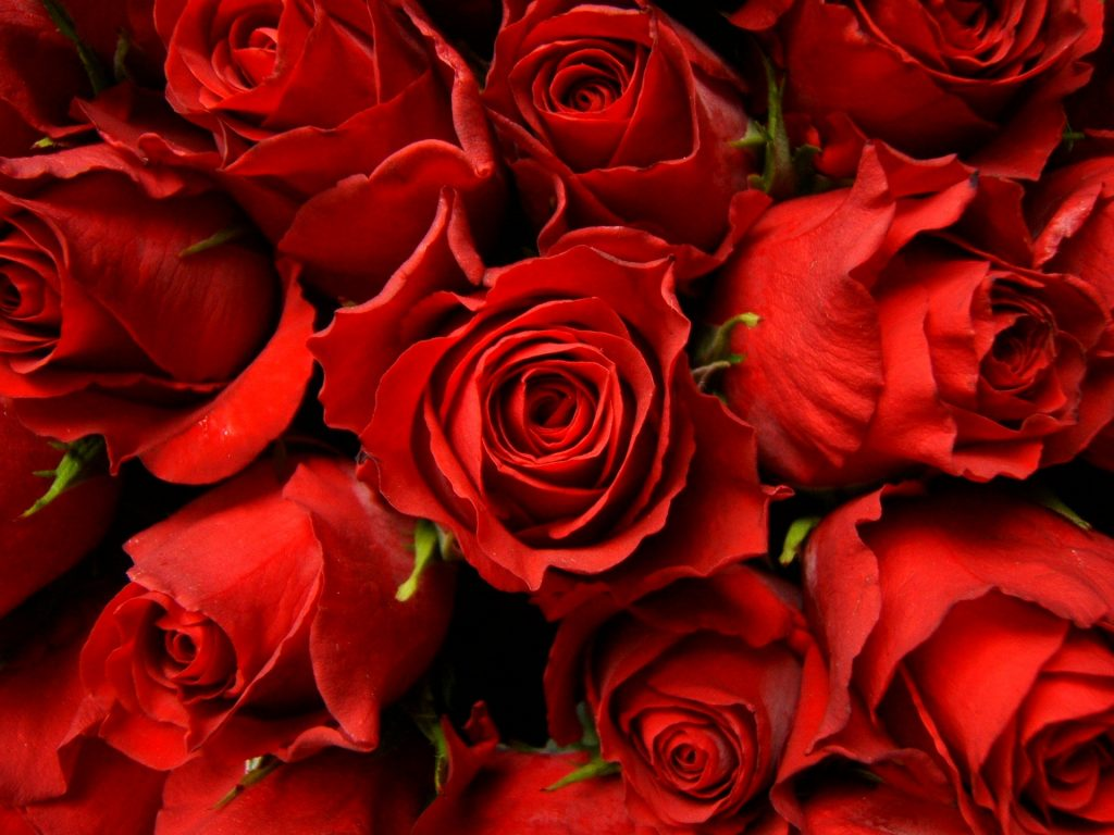 red-roses-background-wallpaper-PIC-MCH098405-1024x768 Red Wallpaper Tumblr 37+