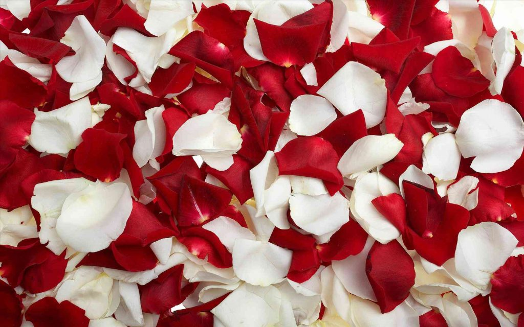 red-roses-tumblr-images-wallpaper-red-Red-Roses-Iphone-Wallpaper-Tumblr-roses-tumblr-wallpaper-vint-PIC-MCH098411-1024x640 Red Wallpaper Tumblr 37+