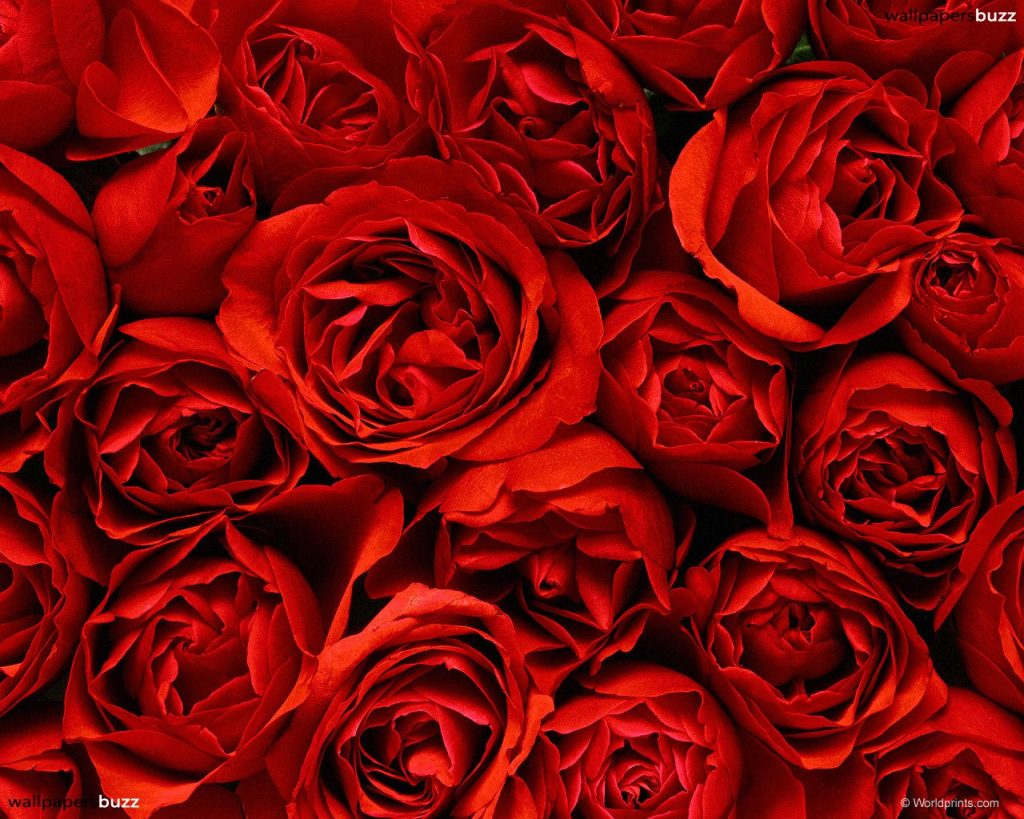 red-roses-tumblr-wallpaper-PIC-MCH098414-1024x819 Red Wallpaper Tumblr 37+