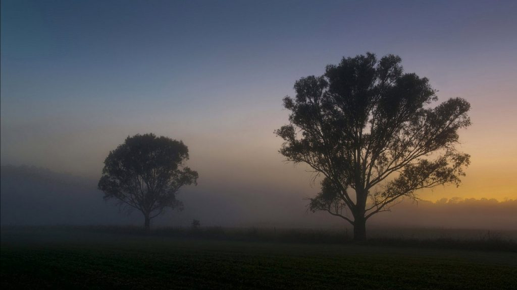 trees-landscape-lonely-tree-fog-nature-hd-images-d-x-PIC-MCH0108128-1024x576 Lonely Wallpapers For Mobile Free 36+