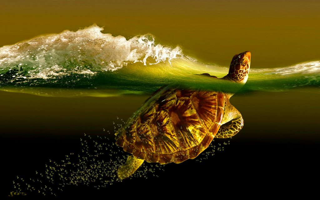 turtle-desktop-wallpapers-PIC-MCH0108502-1024x640 Baby Turtle Wallpapers 32+