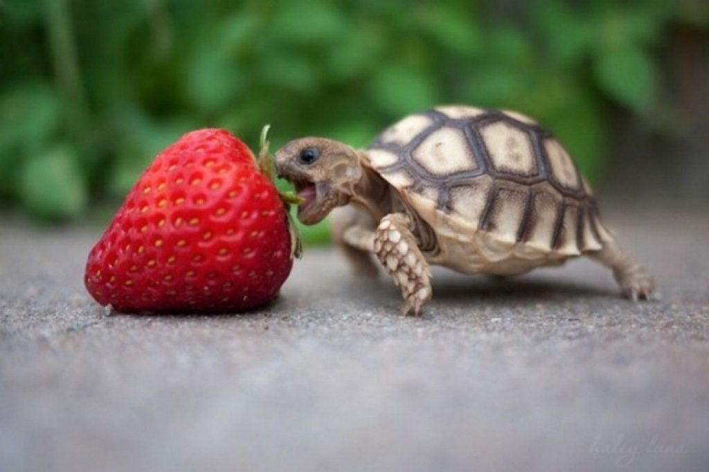 turtle-wallpaper-PIC-MCH016376-1024x681 Funny Turtle Wallpapers 27+