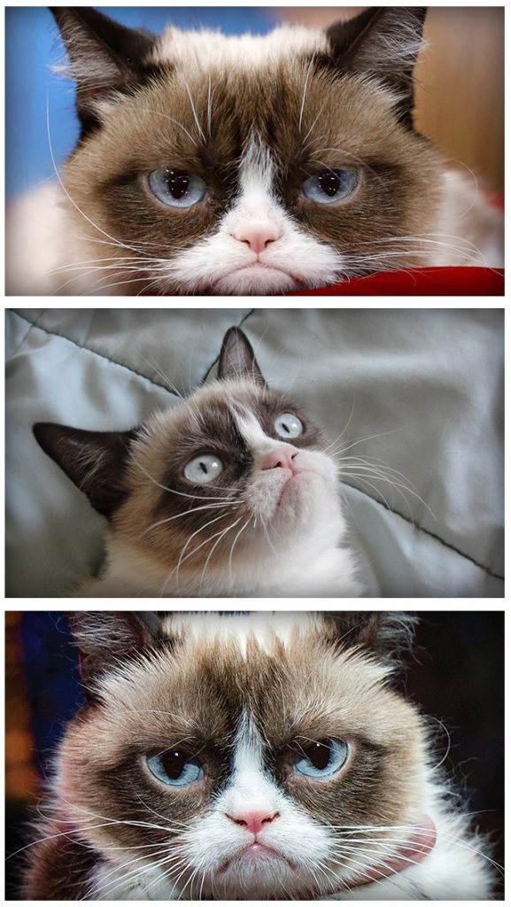 Grumpy Cat Iphone Wallpapers 22 Page 2 Of 3 Dzbc Org