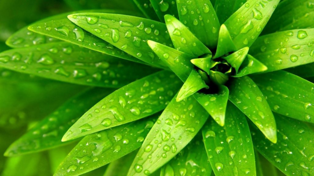 wallpaper-for-pc-free-Download-PIC-MCH0111778-1024x576 Hd Green Wallpapers For Pc 32+