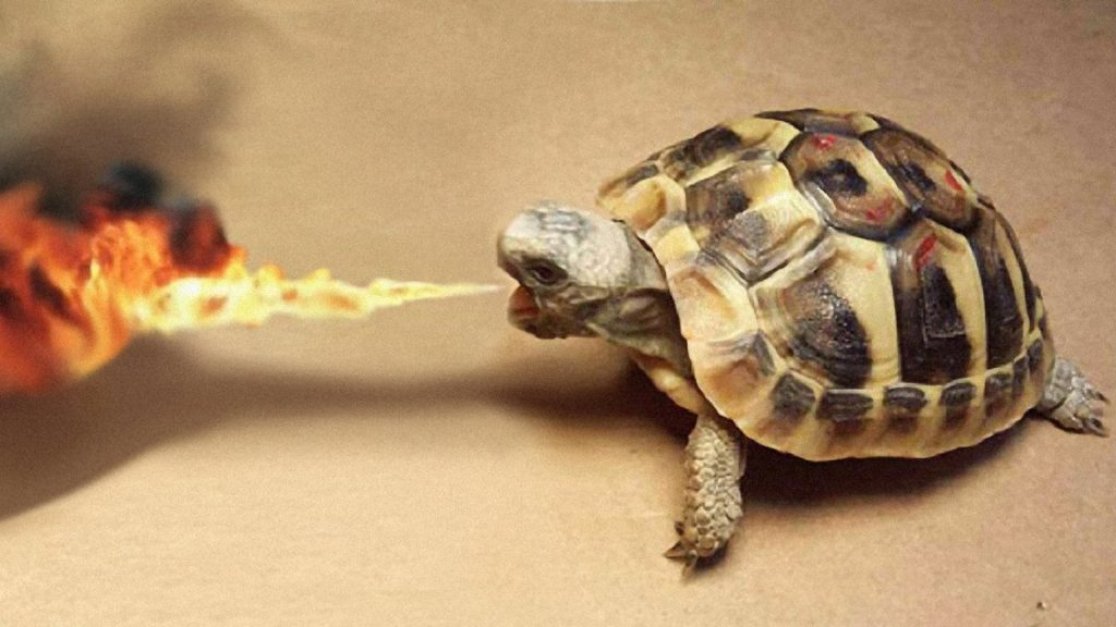 wallpaper-turtle-breathing-fire-reptile-wallpapers-images-PIC-MCH0112579-1024x576 Funny Turtle Wallpapers 27+