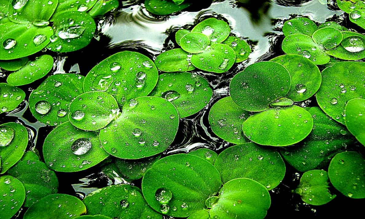 Water Drops Live Wallpaper Android Wallpapers Hd PIC MCH0115521