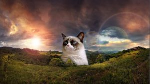 Grumpy Cat Wallpapers Hd 25+