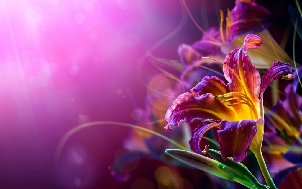Abstract-Flower-Backgrounds-PIC-MCH038513-1024x640 Wallpaper Hd Abstract Flowers 49+