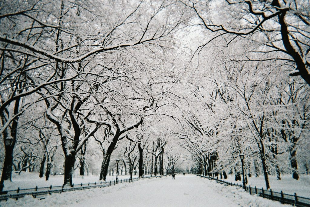 Central-Park-walkway-under-snow-NYC-February-PIC-MCH051842-1024x683 Central Park Snow Wallpaper 30+