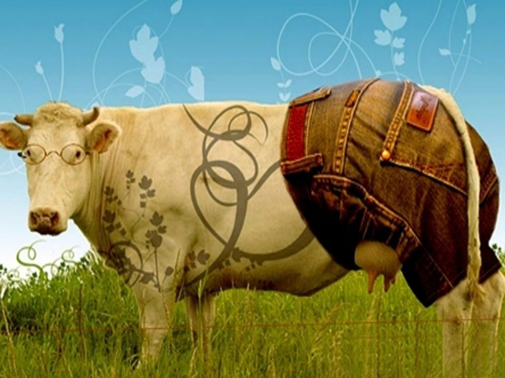 Funny-Cow-Movie-Wallpapers-PIC-MCH066792-1024x768 Cow Wallpaper Gallery 28+