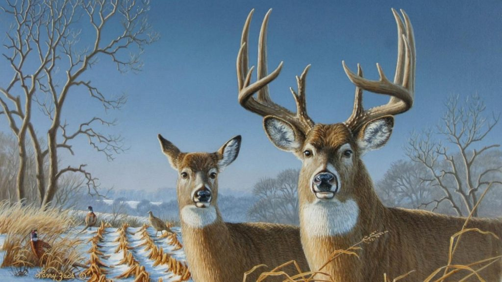 PIC-MCH08991-1024x576 Deer Wallpaper Android 28+