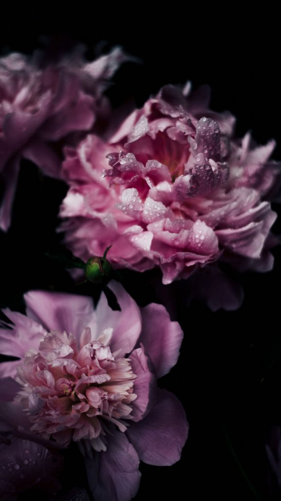 Vintage Flower IPhone Wallpaper PIC MCH0110333 576x1024 Lilac For