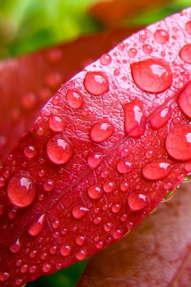 Water-Bubbles-On-Pink-Leaf-l-PIC-MCH029628 Bubble Wallpapers For Mobile Phones 27+