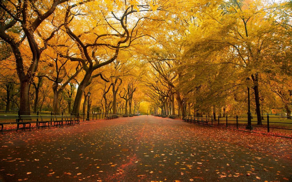 aeefccaaccbbae-PIC-MCH036662-1024x640 Central Park Autumn Wallpaper 23+