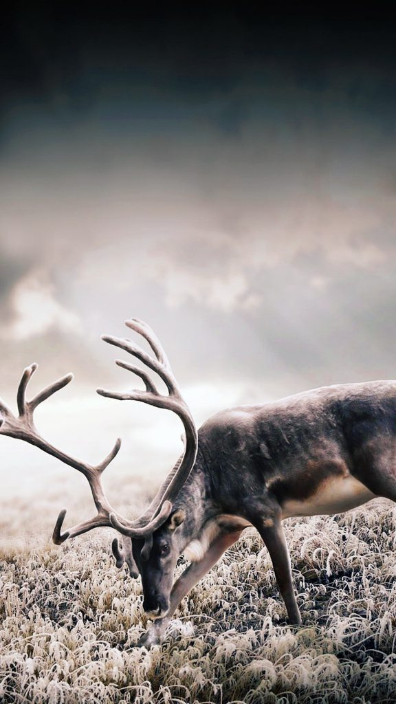android-x-wallpaper-PIC-MCH040136-576x1024 Deer Wallpaper Android 28+