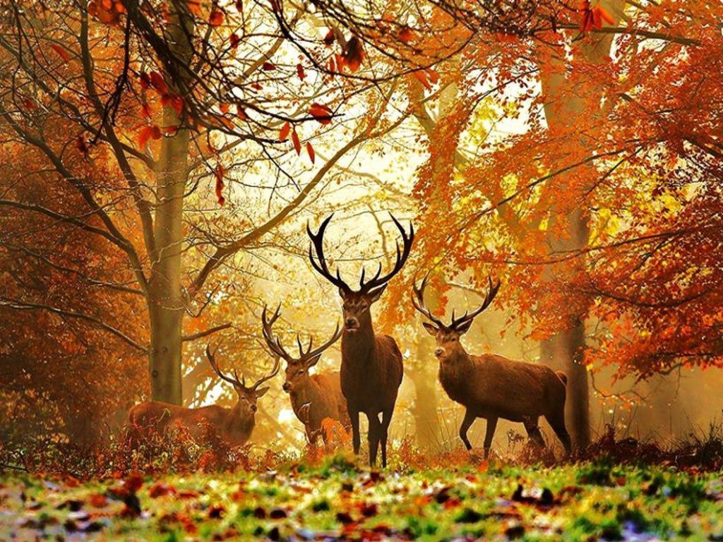cegxCrZ-PIC-MCH051757-1024x768 Deer Wallpaper Images 40+