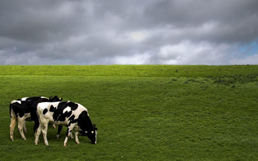 cow-wallpaper-hd-wallpapers-PIC-MCH054626-1024x640 Cow Wallpaper Gallery 28+