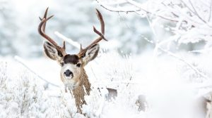 Deer Wallpaper Images 40+