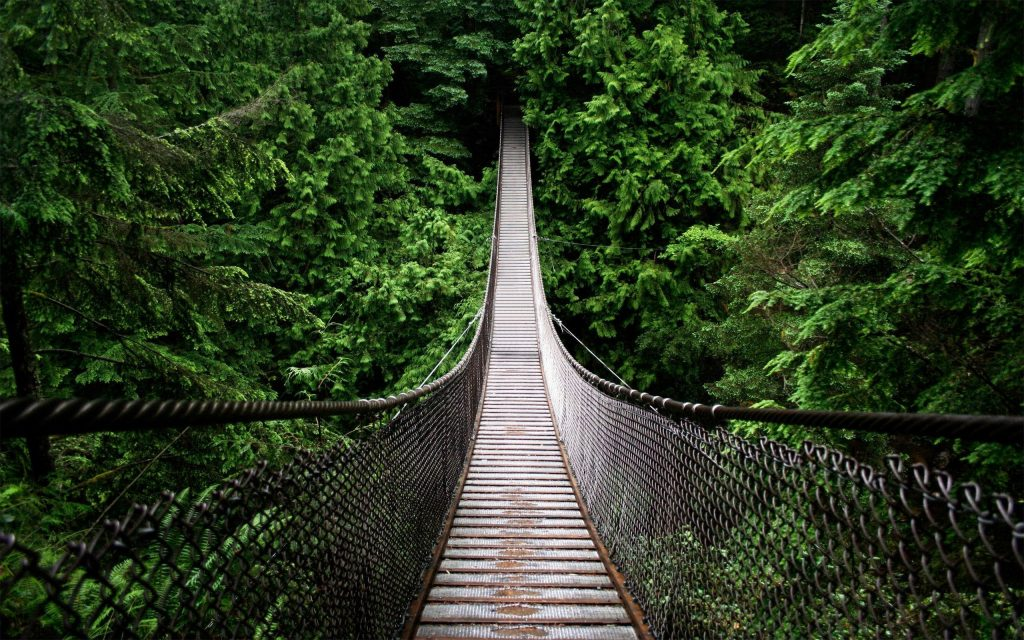 forest-bridge-jungle-hanged-nature-live-wallpapers-free-download-PIC-MCH064727-1024x640 Nature Live Wallpapers 9+