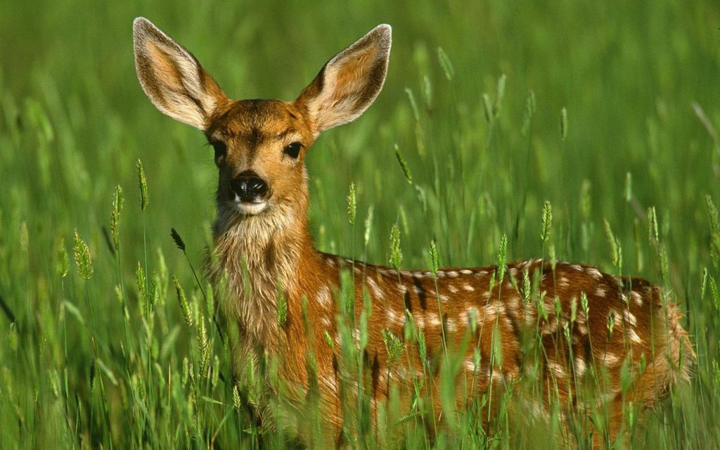 qQgZSL-PIC-MCH096872-1024x640 Deer Wallpaper Android 28+