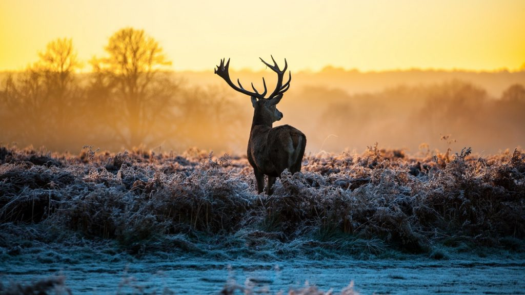 whitetail-deer-wallpaper-x-for-p-PIC-MCH023466-1024x576 Deer Wallpaper Images 40+