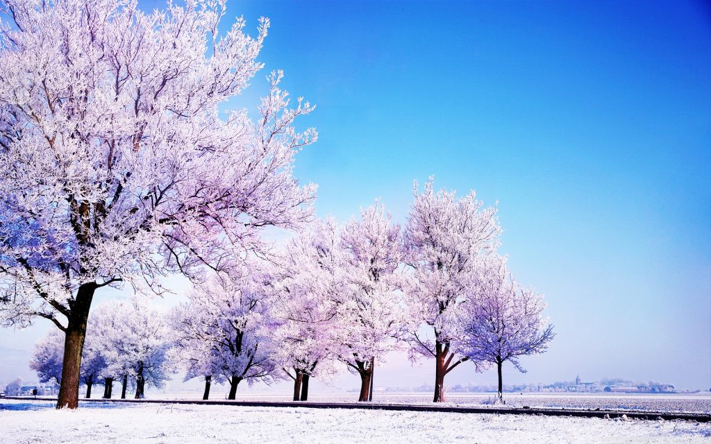 winter-background-hd-PIC-MCH0116809-1024x640 Pc Background Wallpaper Hd 37+