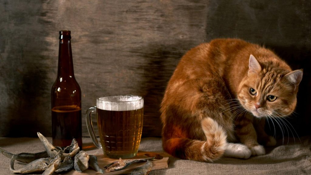 Cat-And-Beer-Funny-Animal-Wallpaper-HD-free-for-desktop-PIC-MCH051510-1024x576 Funniest Wallpapers Free 51+